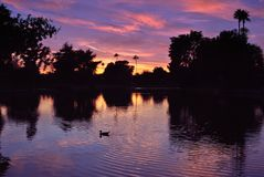 Reflexión de las palmeras de la foto de la puesta del sol del rancho de Dobson Fotos de archivo libres de regalías