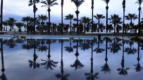 Reflexión de las palmeras en el agua de la piscina metrajes