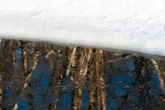 Reflexión de los árboles de abedul en un agujero del hielo en invierno Imagen de archivo