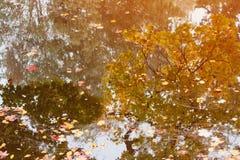 Reflexión de los árboles amarillos de la caída en agua en bosque Foto de archivo libre de regalías