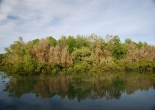 Reflexión de los árboles del mangle en agua imagen de archivo libre de regalías
