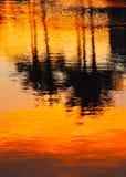 Reflexión de palmas en agua en la puesta del sol Imágenes de archivo libres de regalías