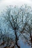 Reflexión de ramas en el agua foto de archivo libre de regalías