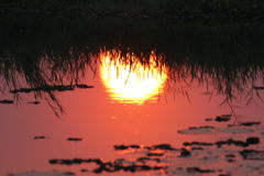 Reflexión de Sun Imagen de archivo libre de regalías