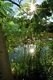 Reflexión de Sun a través de árboles en la charca imagen de archivo
