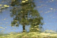 Reflexión de un árbol Imagen de archivo libre de regalías