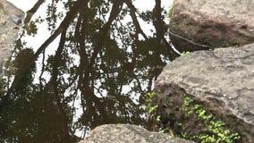 Reflexión de un árbol de arce japonés, en la charca de un jardín japonés ajardinado en Australia almacen de metraje de vídeo
