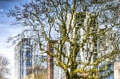 Reflexión de un árbol plano y de edificios Imagen de archivo