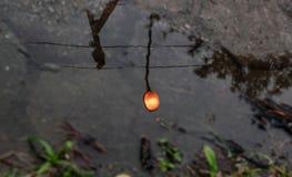 Reflexión de una luz de calle en el agua imagen de archivo