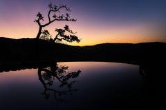 Reflexión del árbol Fotos de archivo