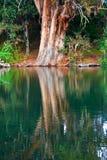 Reflexión del árbol Imágenes de archivo libres de regalías