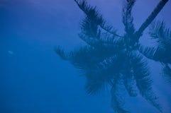 Reflexión del árbol de coco Foto de archivo libre de regalías