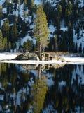Reflexión del árbol de pino fotografía de archivo