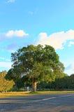 Reflexión del árbol de pino en un lago, parque nacional de Khaoyai Yai, Tailandia Imagenes de archivo