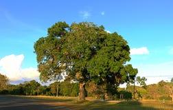 Reflexión del árbol de pino en un lago, parque nacional de Khaoyai Yai, Tailandia Fotos de archivo