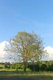 Reflexión del árbol de pino en un lago, parque nacional de Khaoyai Yai, Tailandia Foto de archivo