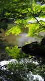 Reflexión del árbol en el agua Fotos de archivo libres de regalías