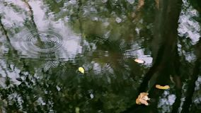 Reflexión del árbol en el lago almacen de metraje de vídeo