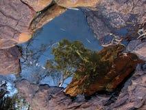 Reflexión del árbol, reyes Canyon, Australia Foto de archivo