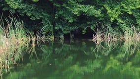 Reflexión del agua de la ondulación en el lago de la montaña y el bosque de color verde oscuro metrajes