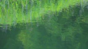Reflexión del agua de la ondulación en el lago de la montaña y el bosque de color verde oscuro almacen de video