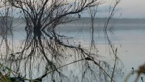 Reflexión del agua y del cepillo Imagenes de archivo