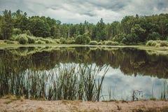 Reflexión del bosque Fotografía de archivo