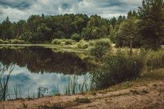 Reflexión del bosque Imagen de archivo libre de regalías