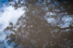 Reflexión del bosque Foto de archivo libre de regalías