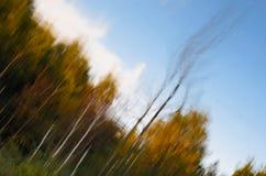 Reflexión del bosque de la caída en el lago Foto de archivo libre de regalías