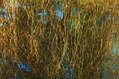 Reflexión del bosque de la primavera en fondo del agua Fotos de archivo libres de regalías