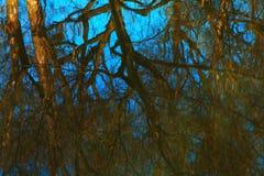 Reflexión del bosque de la primavera en fondo del agua Fotografía de archivo