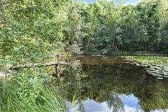 Reflexión del bosque verde y del cielo azul en una charca foresting en verano Imagen de archivo