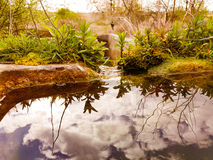 Reflexión del cielo de la libra del agua fotos de archivo