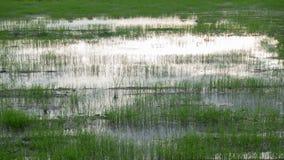 Reflexión del cielo y de la nube en campo de arroz almacen de metraje de vídeo