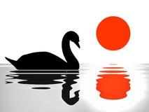 Reflexión del cisne en la puesta del sol del lago/el ejemplo de la silueta Foto de archivo