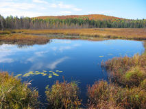 Reflexión del lago autumn Foto de archivo libre de regalías