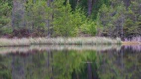 Reflexión del lago en el bosque durante otoño, Escocia del pino almacen de metraje de vídeo