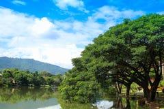 Reflexión del lago tree debajo del cielo azul claro imagenes de archivo