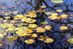 Reflexión del otoño Fotos de archivo libres de regalías