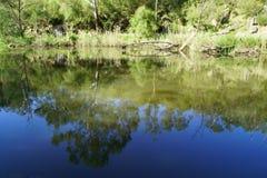 Reflexión del río de árboles y del cielo Imágenes de archivo libres de regalías