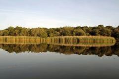 Reflexión del Riverbank de Peconic imagen de archivo