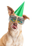 Reflexión divertida de la torta de cumpleaños del perro Foto de archivo libre de regalías