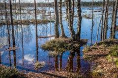 reflexión El lago desbordó Inundación temprana de la primavera Rastro de naturaleza del pantano de Viru Estonia imagenes de archivo