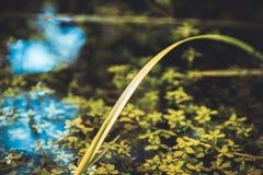 Reflexión en agua imagenes de archivo