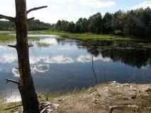 Reflexión en agua Imagen de archivo