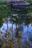 Reflexión en el agua de un canto rodado grande, de una cuesta herbosa y de árboles de abedul en la orilla Fotografía de archivo