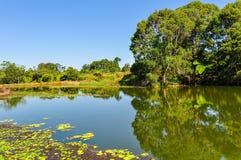 Reflexión en el lago, altiplanicies de Atherton, Australia Imagen de archivo
