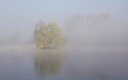 Reflexión en el lago del árbol en niebla Fotografía de archivo