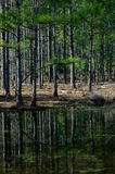 Reflexión en el pantano de árboles Foto de archivo libre de regalías